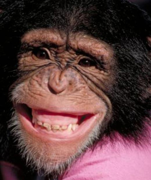 Funny-Chimpanzee-Closeup-Smiley-Face-Picture
